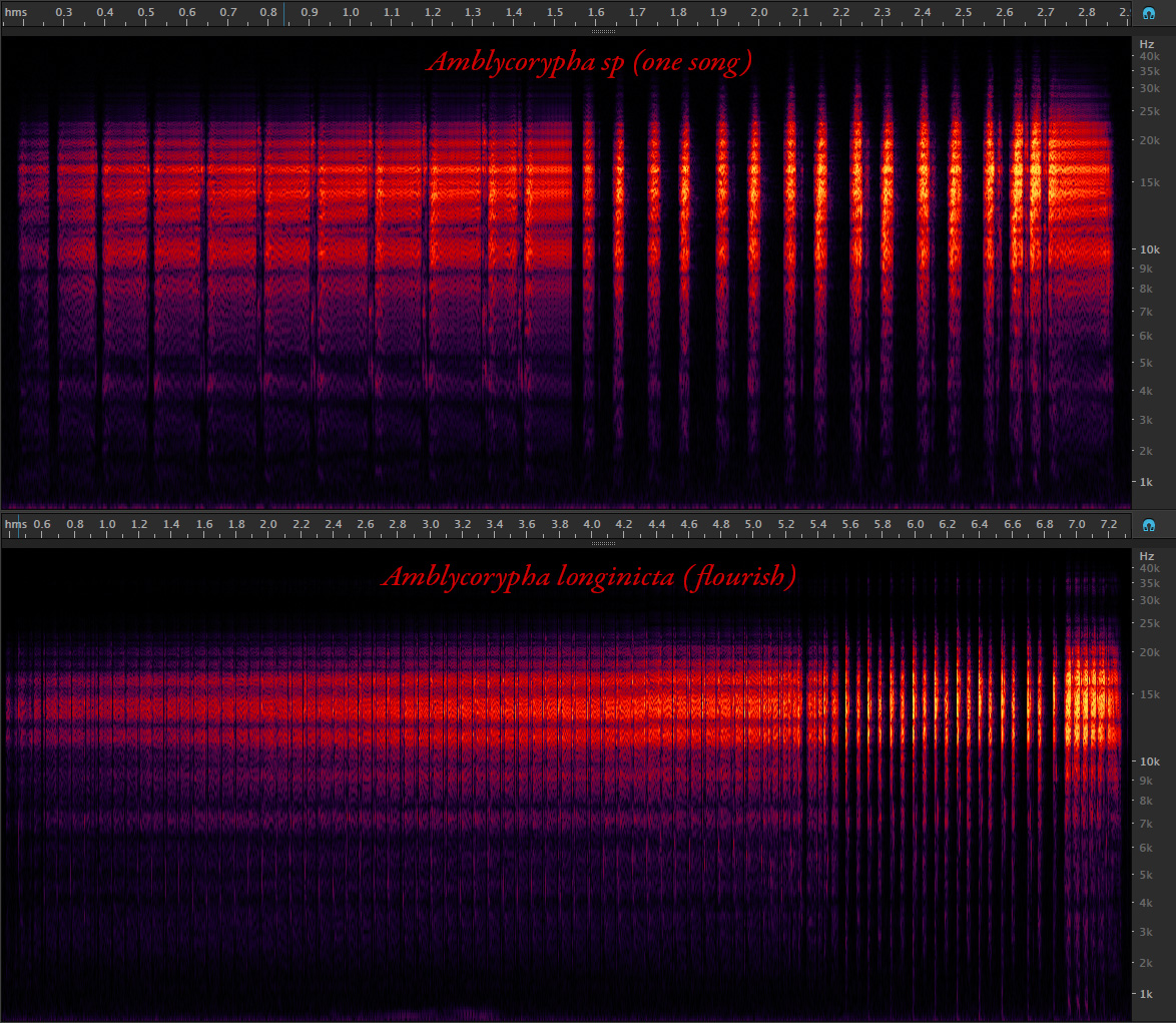 Comparison of spectrograms of songs