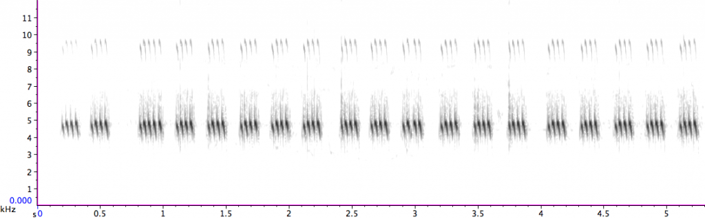 Sonogram of the Southern Wood Cricket's song. Note that there are 4 chirps per second.