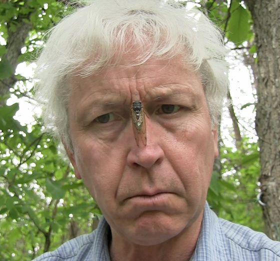 photo of a cicada sitting on Lang's nose