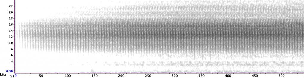 Sonagram of Marsh Conehead showing individual syllables.