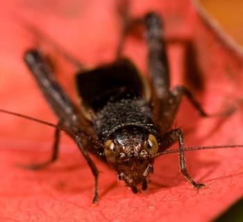 insect_musicians_allo-allard_LE_DIGI