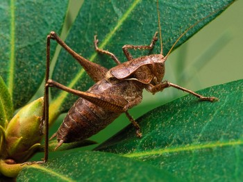 insect_musicians_atlan-ameri_LE_SLIDE