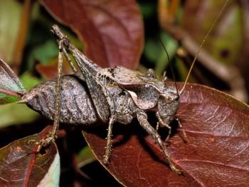 insect_musicians_atlan-mont_LE_SLIDE_ab