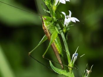 insect_musicians_cono-fasc_WH_DIGI