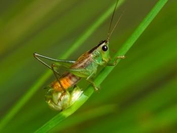 insect_musicians_cono-spart_LE_SLIDE