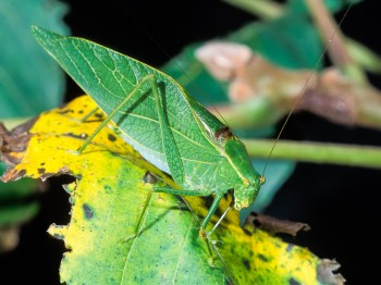 insect_musicians_micro-retin_LE_SLIDE