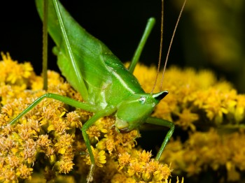insect_musicians_neocon-exili_WH_DIGI-Edit