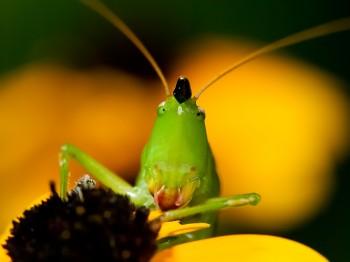 insect_musicians_neocono-nebra_WH_DIGI