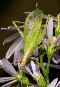 insect_musicians_oecan-latip_WHa_DIGI_ab_ab