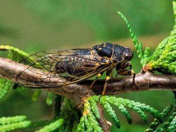 insect_musicians_okana-canad_LE_SLIDE
