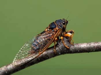 insect_musicians_okana-rimosa_LE_SLIDE