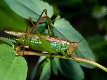 insect_musicians_orchel-agile_WH_DIGI