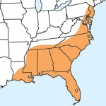 Range Map for Red-headed Meadow Katydid