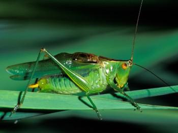 insect_musicians_orchel-glad_LE_EDIT_a