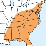 Range Map for Lesser Pine Katydid