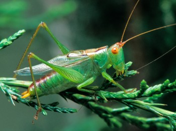 insect_musicians_orchel-silvat_LE_SLIDE