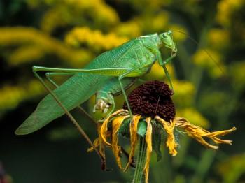 insect_musicians_scudd-curvi_LE_SLIDE