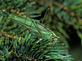insect_musicians_scudd-fasc_LE_SLIDE