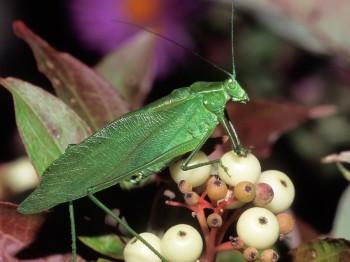 insect_musicians_scudd-pisti_LE_SLIDE