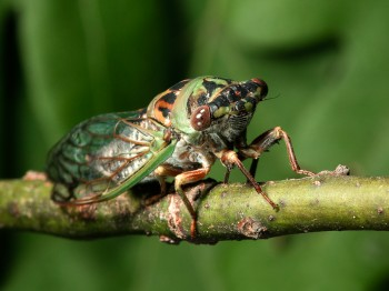 insect_musicians_tibi-davi_WHa_DIGI_ab
