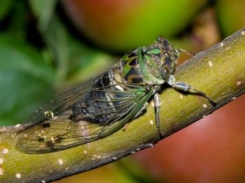 insect_musicians_tibi-prui_WH_DIGI